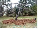 Post Como construir una cama de cultivo sencilla y rapida sin cavar