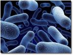 Post Como preparar un compuesto rico en microorganismos