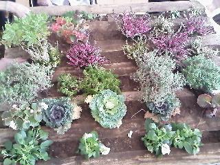 Rosas tomates cb semillas y cultivos verticales for Cultivos verticales definicion