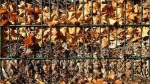 Post El metodo de compostaje Jean Pain