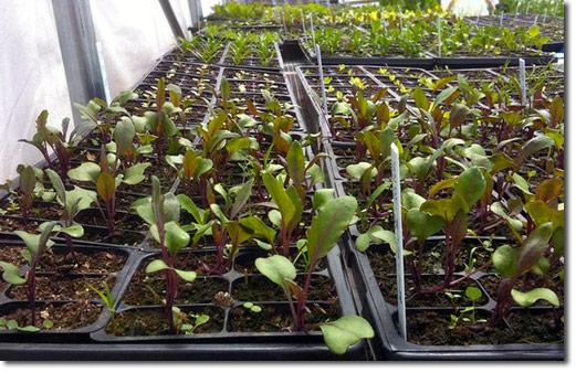 Post Cómo germinar semillas