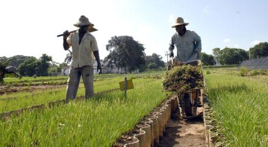 Post Agricultura urbana en Cuba