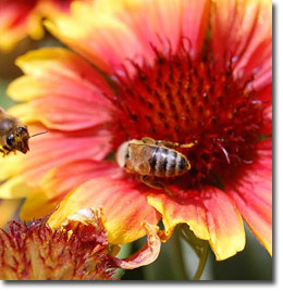 Post Como atraer a insectos depredadores y polinizadores