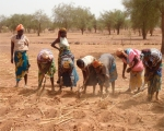 Post La tecnica Zai cultivos en terrenos secos