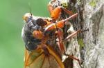 Post Los productos forestales son esenciales en la lucha contra el hambre, insectos incluidos - (Video) 1