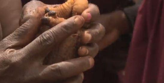 Post Los productos forestales son esenciales en la lucha contra el hambre, insectos incluidos - (Video)