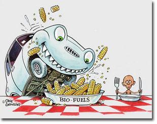 Post Analisis y opinion Comida o Combustible