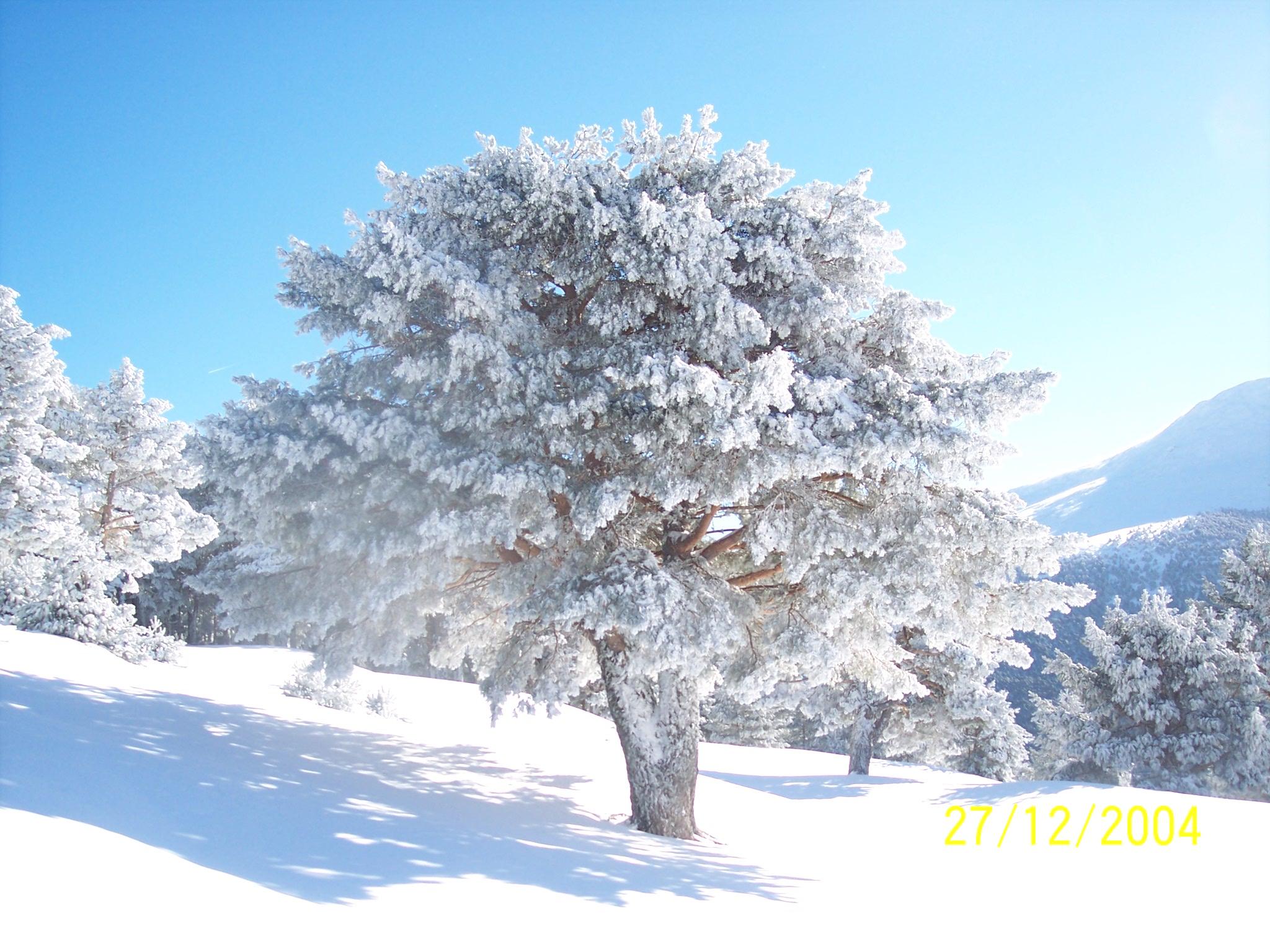 La mejor siembra del verano se hace en oto o invierno for Planta perenne en maceta de invierno