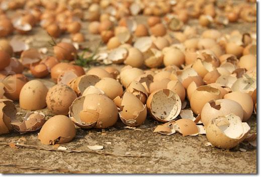 Post añadiendo calcio del huevo a tiempo