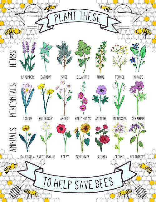 Post Plantas que ayudan a salvar abejas