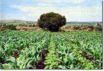 Post Sistemas de cultivo de maximo rendimiento