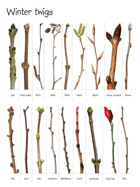Post Winter twigs