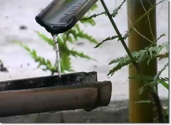 Post Riego por goteo con bambu