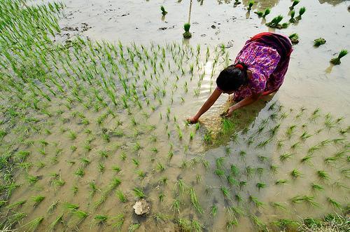 Post Agricultores en Nepal