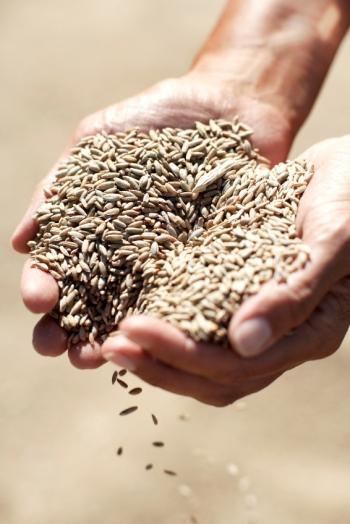 Post Analisis y opinion La cosecha de grano