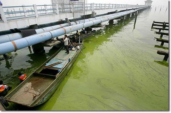 Post el mayor proyecto de acuicultura del mundo