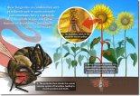 Post Los nenonicotinoides los nuevos DDT